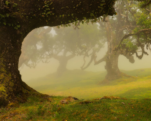 Madeira - Reisfotografie - Jos Pannekoek
