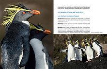 Around the world for penguins - Otto Plantema