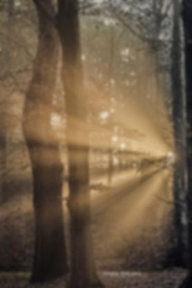 Bosfotografie - Nelleke Wallenburg