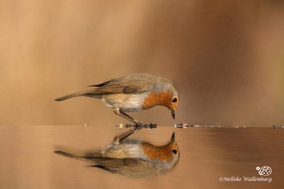 Alles over compositie met reflectie