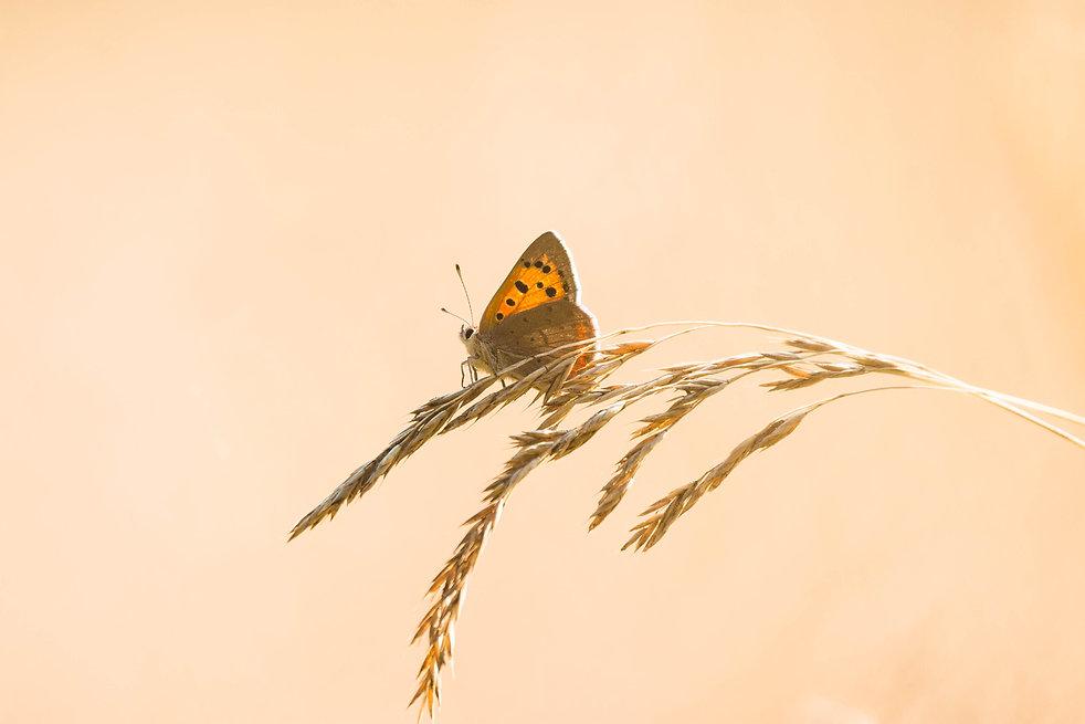 Prachtig licht en vlinder in de zomer - Paulines Blog