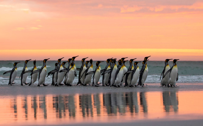 Around the World for Albatrosses and Penguins - Otto Plantema