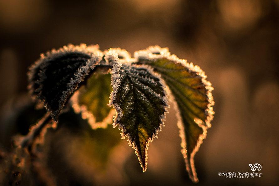Fotograferen in de sneeuw - Nelleke Wallenburg