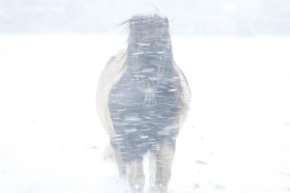 Winter, met een dikke jas aan en een dik pak sneeuw - Paulines Blog