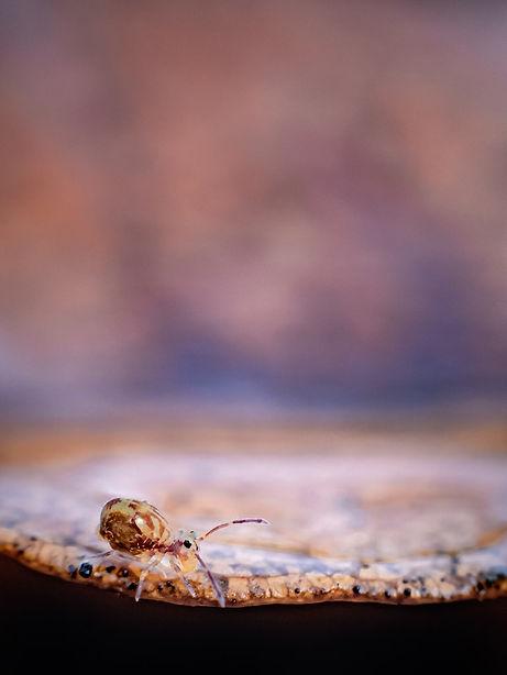 Natuurblog 15 - Springstaartjes - Janneke van der Pol