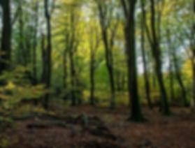 Het Speulderbos