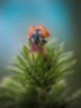 Het lieveheersbeestje - Janneke van der Pol