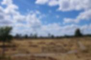 Loonse en Drunense duinen (11-08-2018) - Pieter Heymeijer