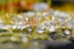 Smeltende sneeuw tussen het mos - deel 1. Van Miranda Rens