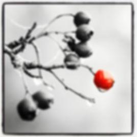 Zwartwit met rode bes