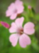 Pretty in pink. Tania Perneel