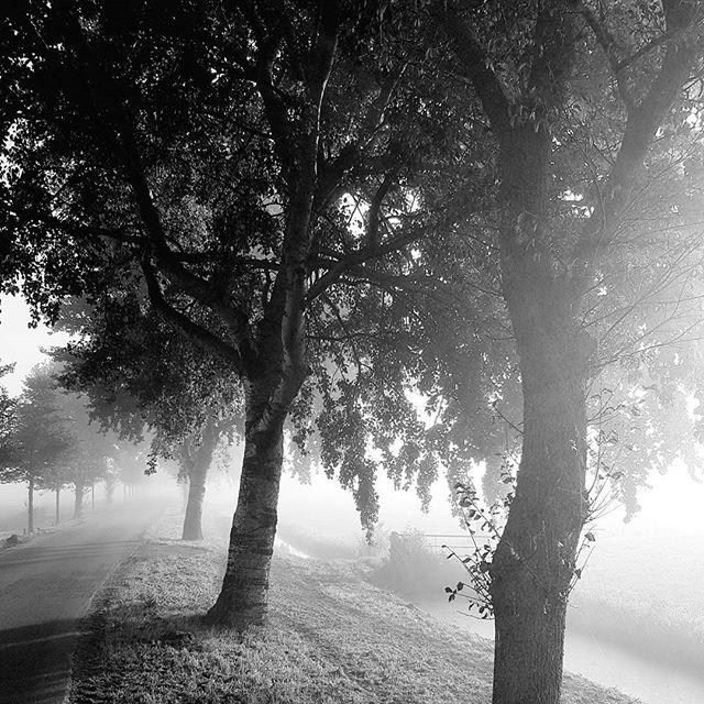 Landweg in de mist