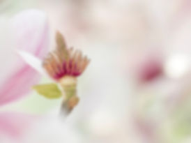 Natuurblog 10 - De lente - Arnhemsmeiske verwondert ...
