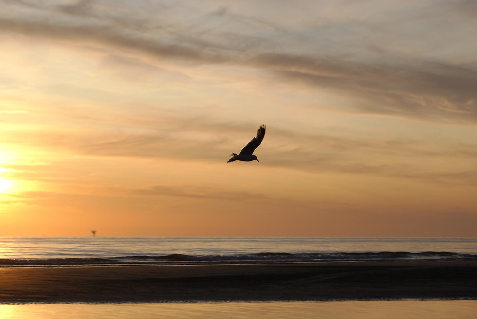 Vogelvlucht - Paulines Fotodicht