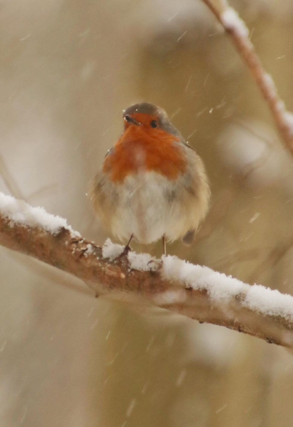 Winter zoals het hoort - Paulines Blog