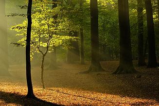 Het bos - Inge Plomp