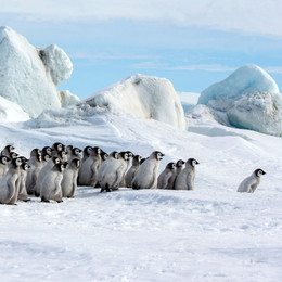 AROUND THE WORLD FOR PENGUINS