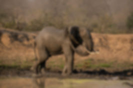 Wildlife Krugerpark - Marielle de Valk