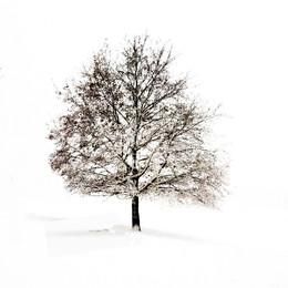 6 - Fotograferen in de sneeuw