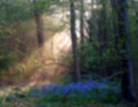Magisch bos - Amelisweerd  (21-04-2018) - Pieter Heymeijer