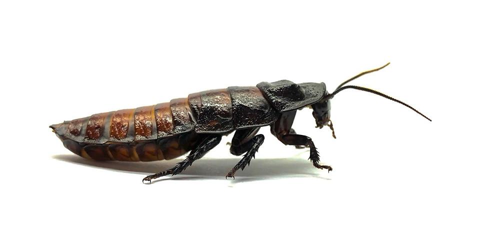 中高階標本(二)