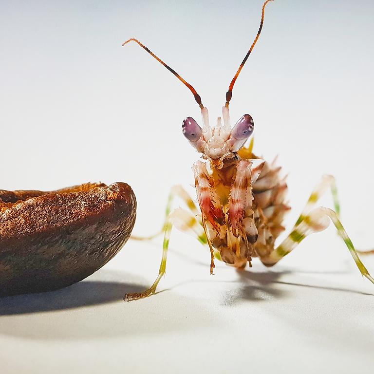 小昆蟲大世界(綠川)