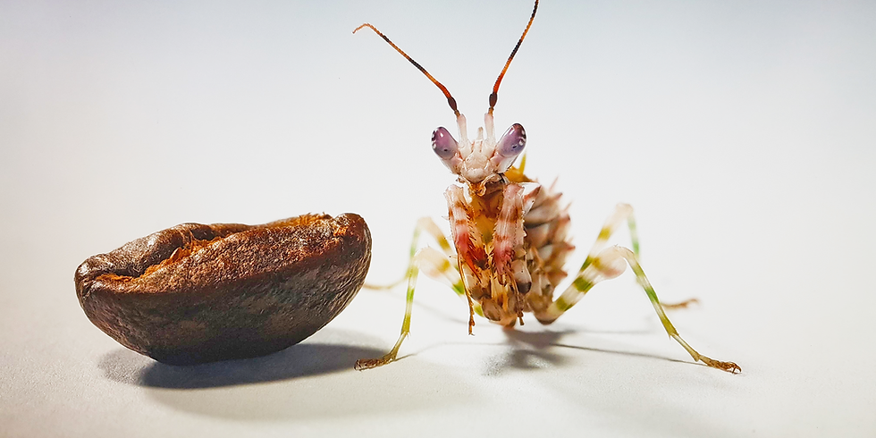 小昆蟲大世界(椰林)