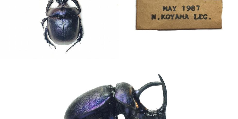 初階標本(一)