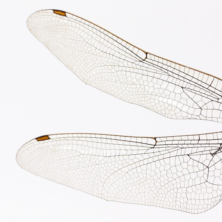 翅膀決定天使或惡魔(綠川)
