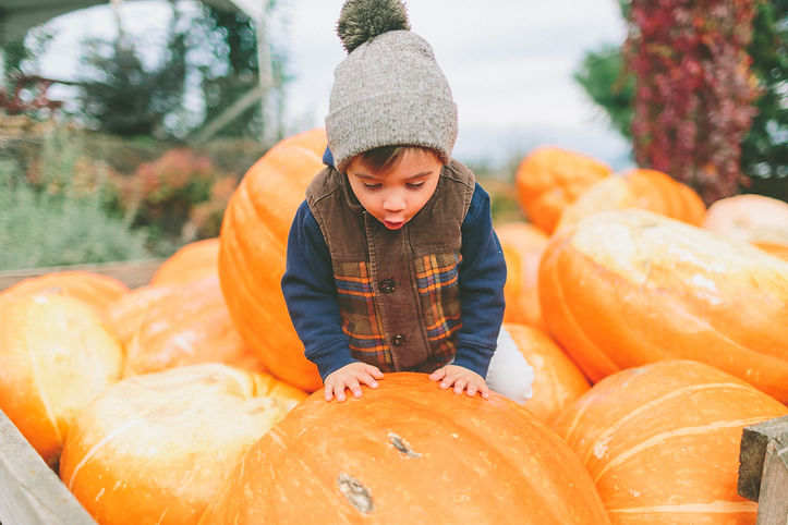 little-boy-in-a-pile-of-pumpkins-XCNQJY9