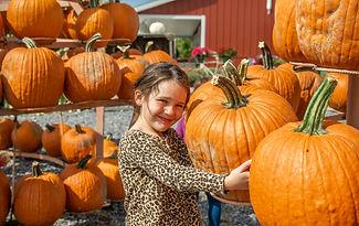 Pumpkin. Patch