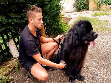 Faire garder son chien
