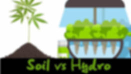 hydro-vs-soil-cannabis.jpg
