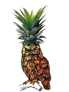 pineowlpple_edited-1.png