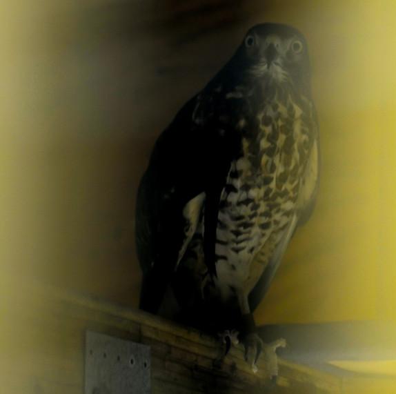 Bird shelter in Northern-Mississippi