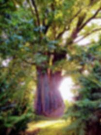 magictree.jpeg