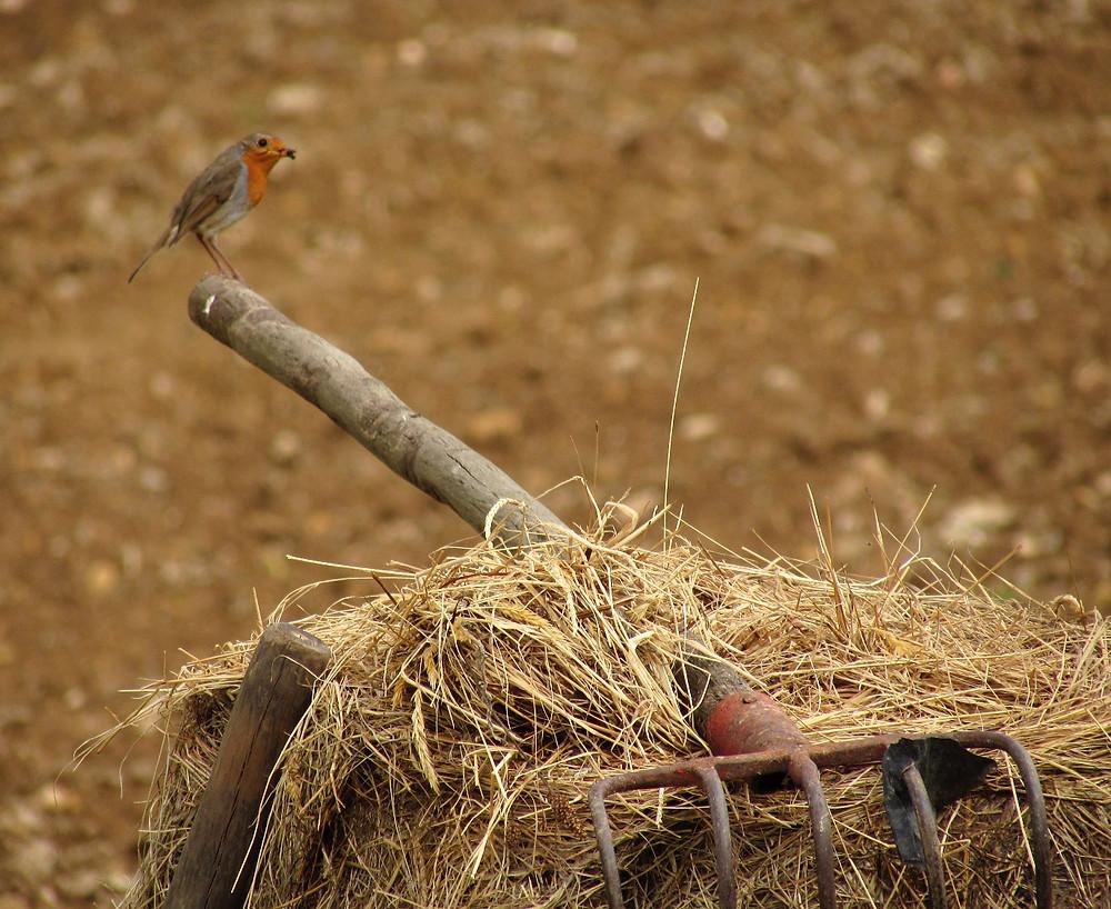 Птичка на вилах