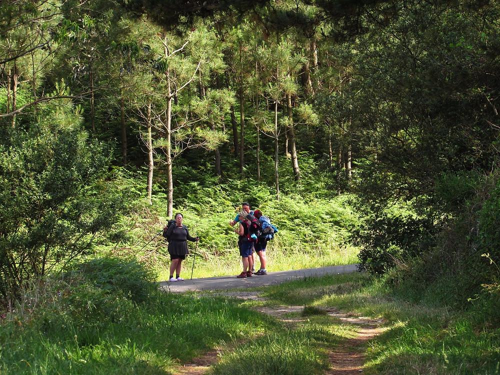 Пилигримы в лесу