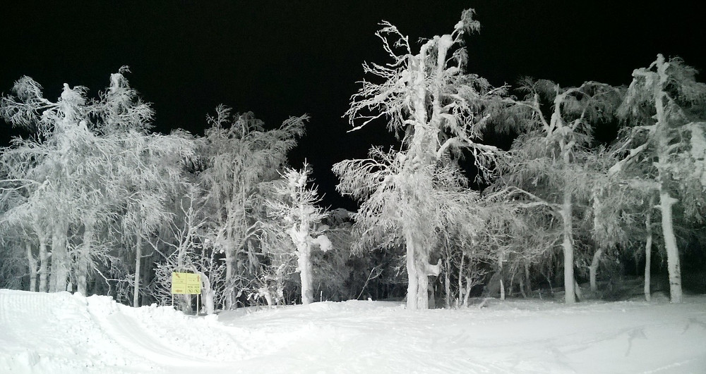 Ночной Аджигардак