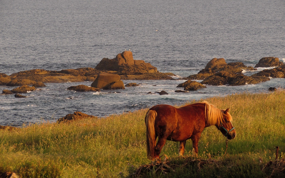 Лошадь на берегу