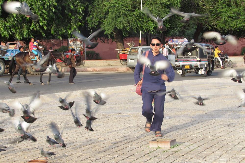 Испуганные голуби