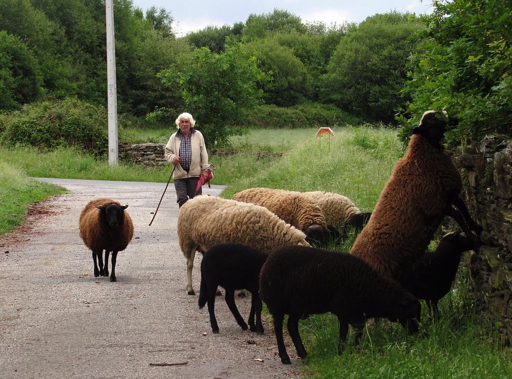 Пастух с овцами