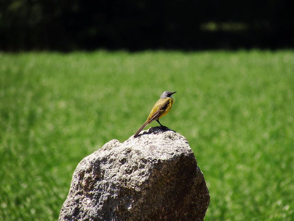 Птичка на камне