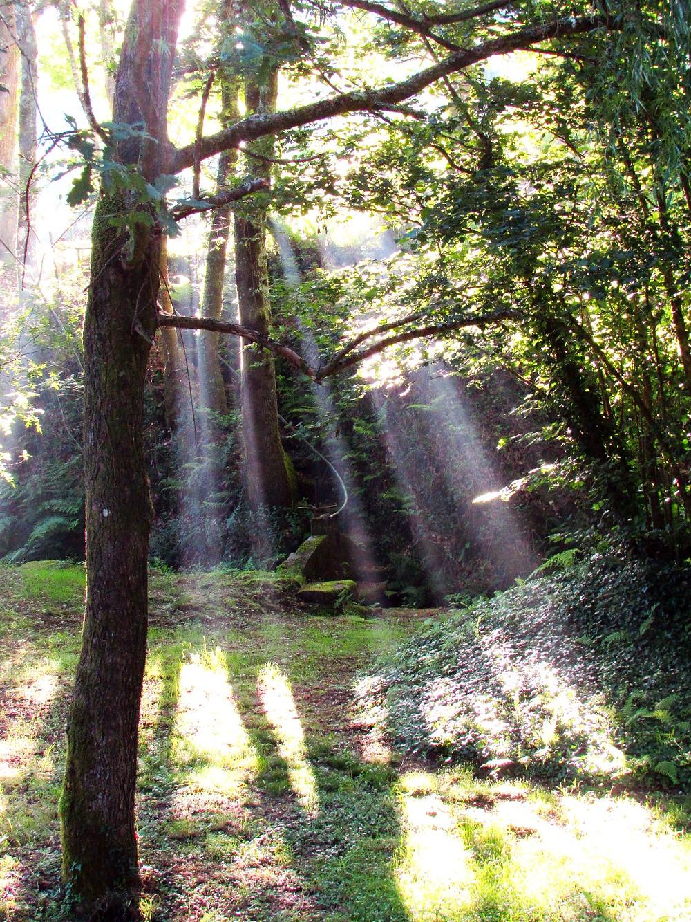 Лучи солнца в лесу