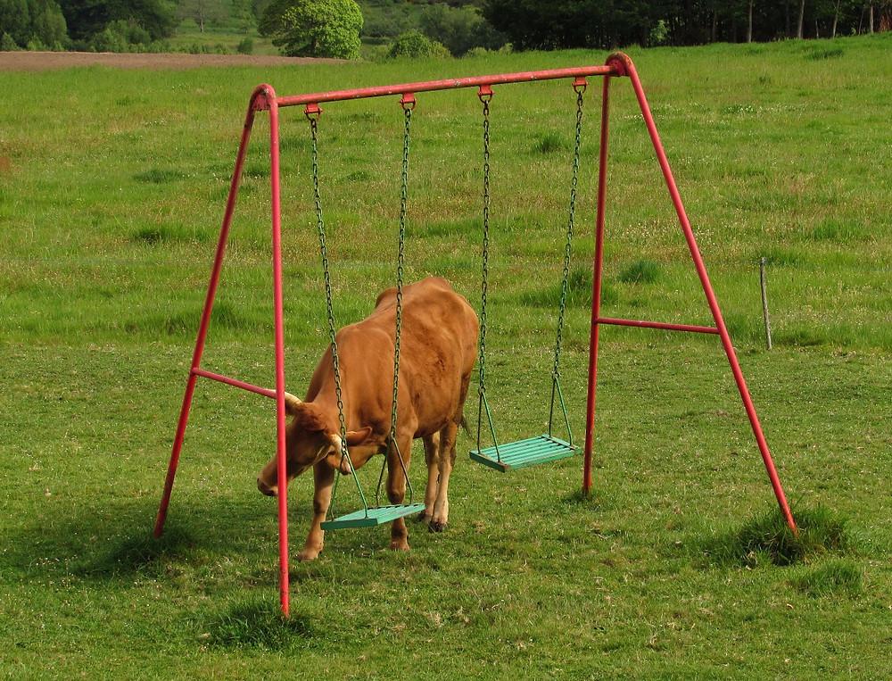 Корова и качели