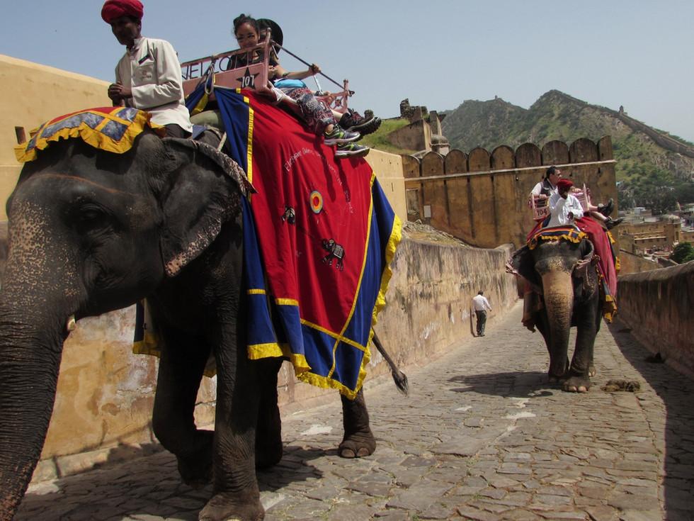 Индия для слабонервных-2015: Джайпур (день 2)