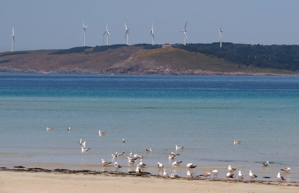 Пляж с чайками