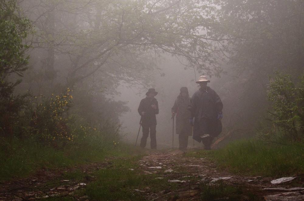 Пилигримы в тумане