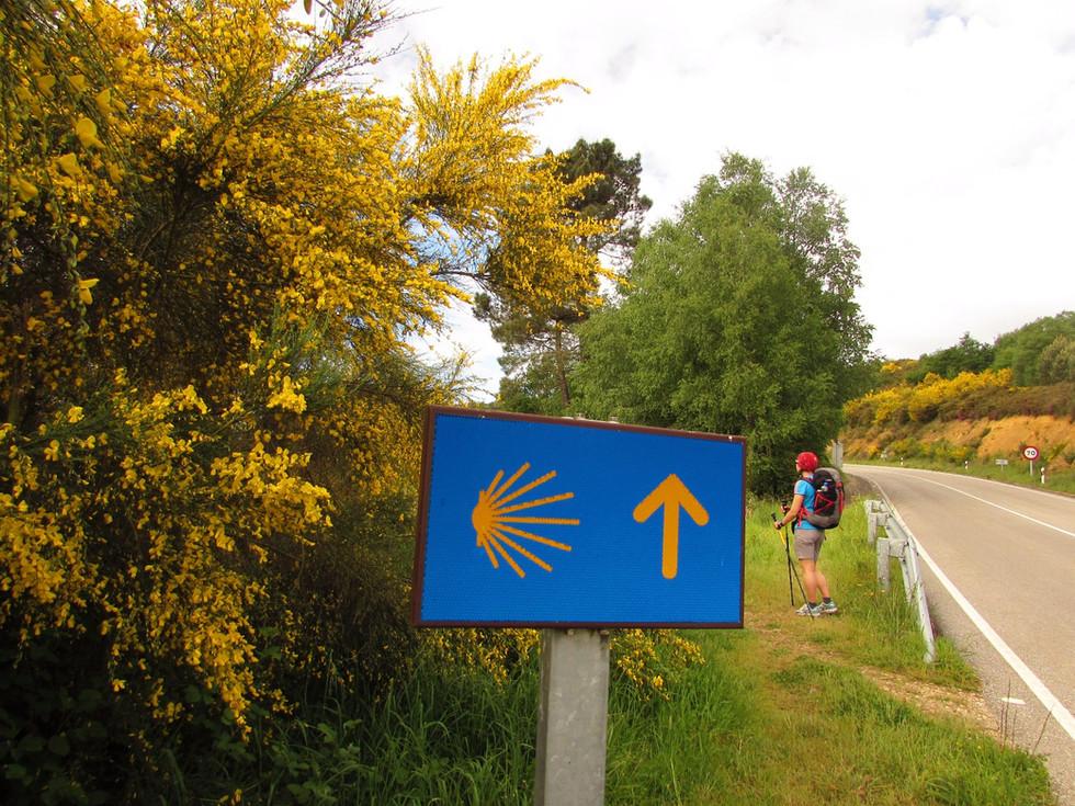Camino Primitivo, день 5: Grandas de Salime - Padrón