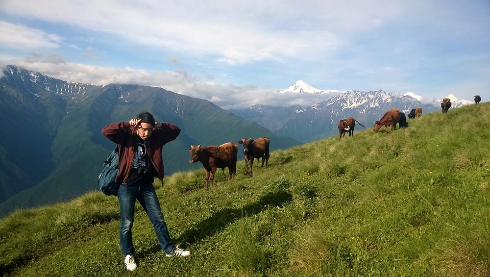 С коровами